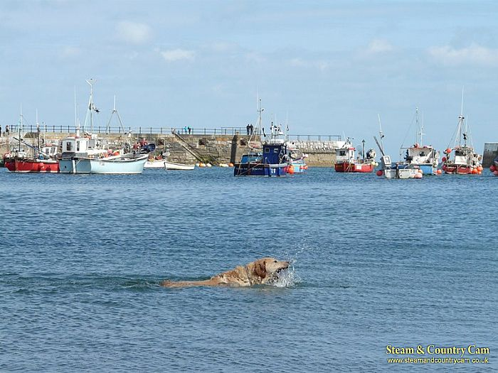 Jess swimming the channel